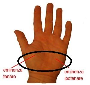eminenze palmo mano, zona di contatto da utilizzare per la compressione