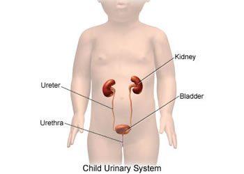 Protetto: Nefrologia e Urologia